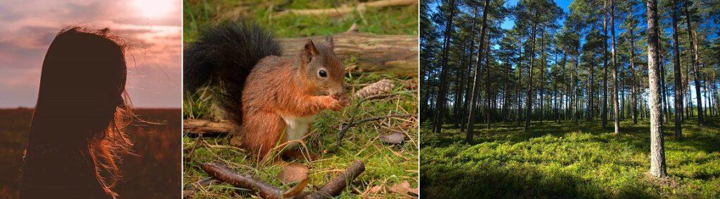 Aurinko, orava ja metsää.