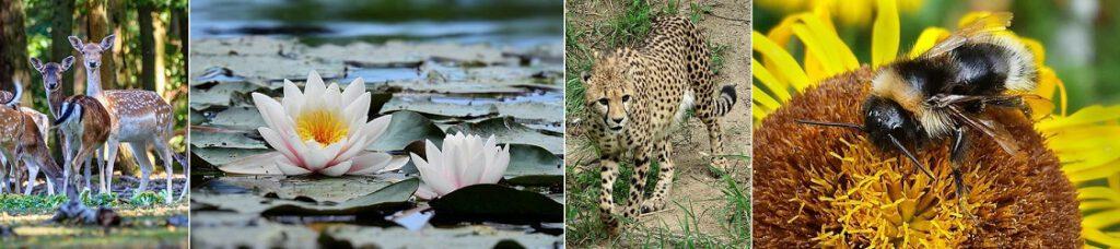 Eläimiä ja luontoa.