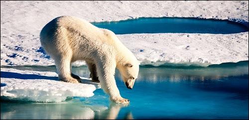Jääkarhu ilmastonmuutoksen kourissa.