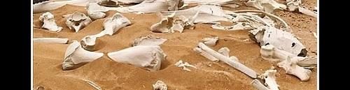 Luita aavikon hiekassa.